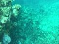 はちさん丸宮古島サンゴ礁ポイント