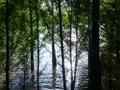 篠栗九大の森の落羽松パート3