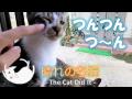 こてつのお兄ちゃんとお母さん 5 - Cat's family -